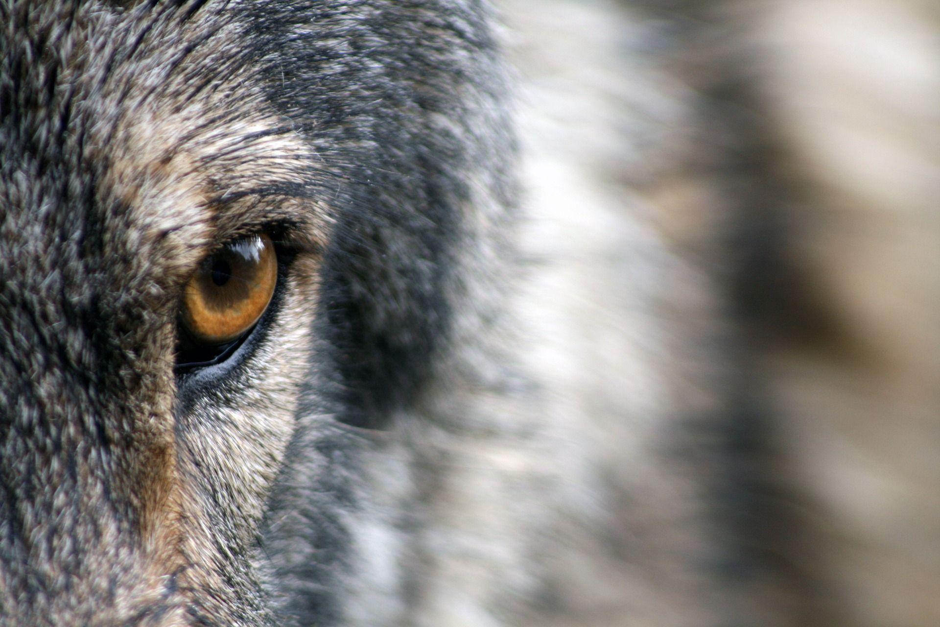 Stellungnahme_Wolf.jpg