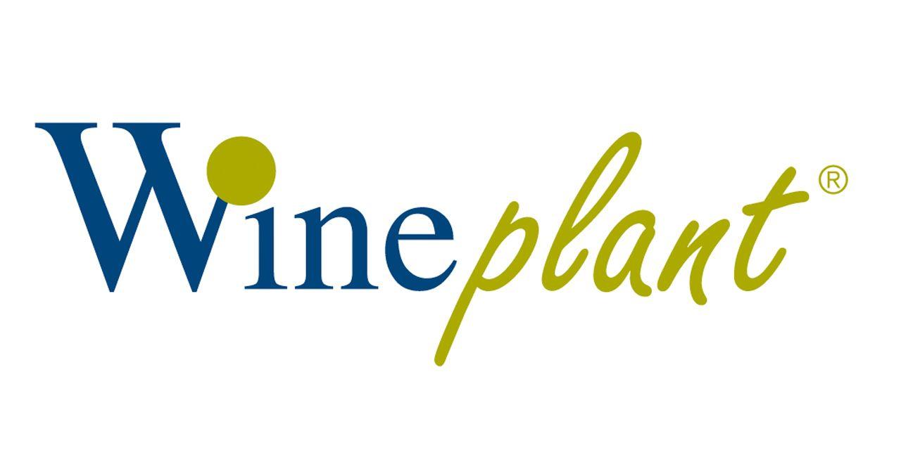 Wineplant.jpg