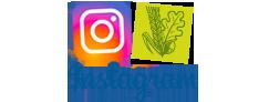 instagram-fuer_webseite.png